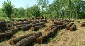"""""""Mientras estén las forestales va haber un conflicto con las comunidades"""" señala Alcalde de Tirúa tras plebiscito"""